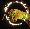 Цирки в Асбесте